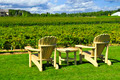 Chairs Overlooking Vineyard - PhotoDune Item for Sale