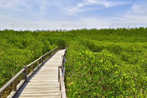 the mangrove forest in Thailand - Stock Photo - Images