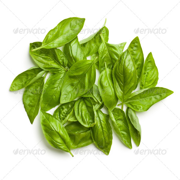 fresh basil leaves - Stock Photo - Images
