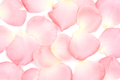 Pink petals background - PhotoDune Item for Sale