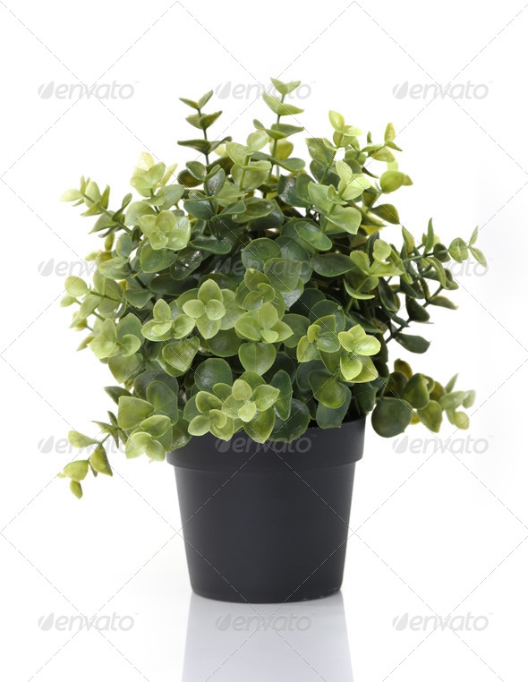 Home plant in pot - Stock Photo - Images