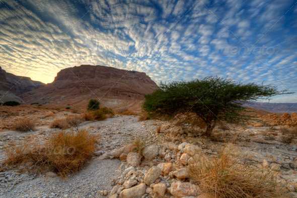 Masada - Stock Photo - Images