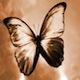 suicidalbutterflies