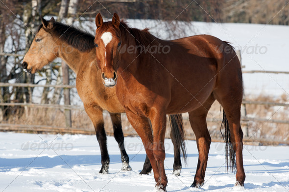 Herd of horses - Stock Photo - Images