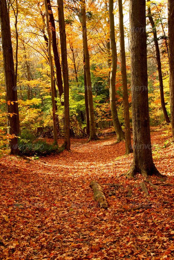 Fall Forest Landscape - PhotoDune Item for Sale
