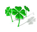 four leaf clovers - PhotoDune Item for Sale
