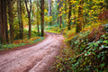 Forest Footpath - PhotoDune Item for Sale