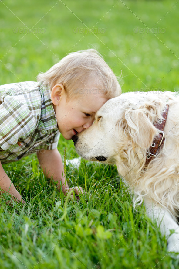 Boy with retriever outdoor - Stock Photo - Images