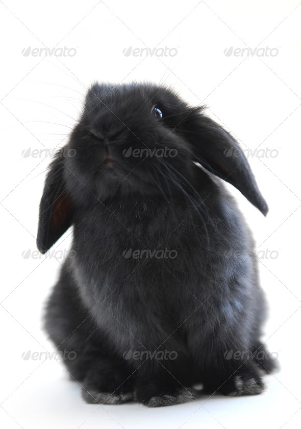 Stock Photo - PhotoDune Bunny Rabbit 194919