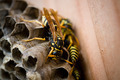 A wasp on its nest - PhotoDune Item for Sale