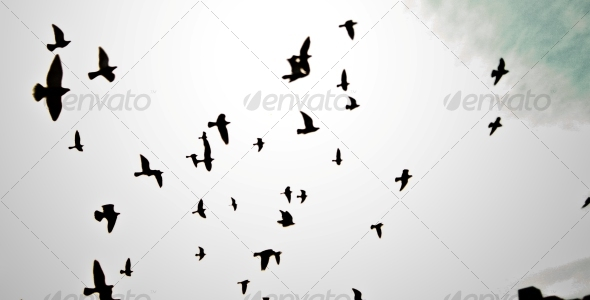 8 Birds Silhouette Brushes - Brushes Photoshop