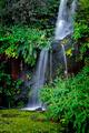 Fall in Eden - PhotoDune Item for Sale