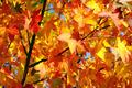 Fall Colors - PhotoDune Item for Sale