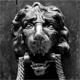 lion85