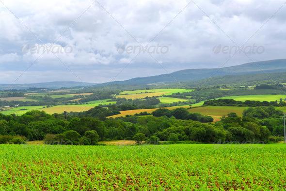 Agricultural Landscape - PhotoDune Item for Sale