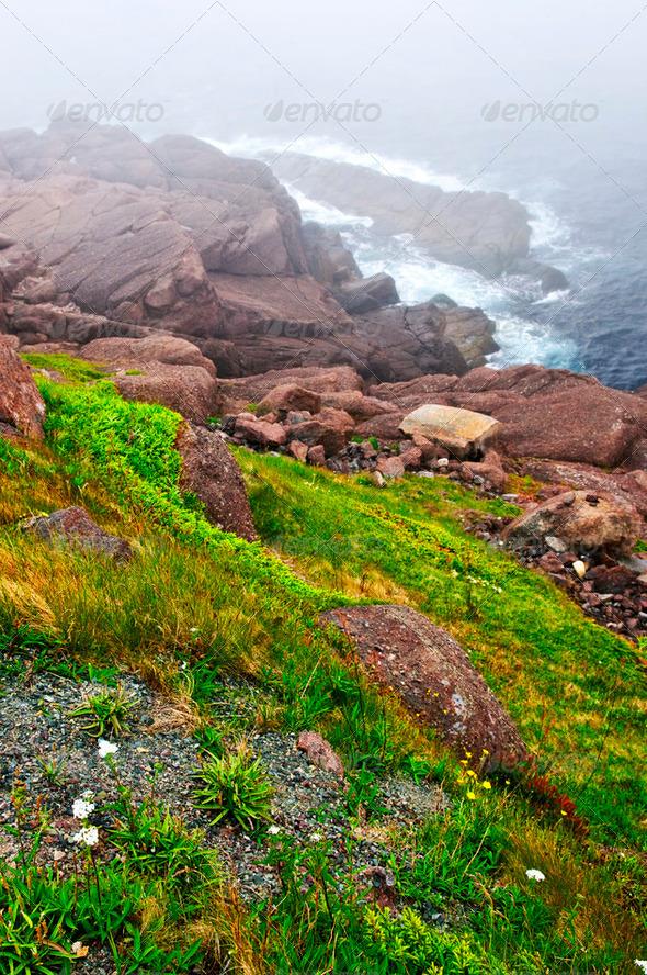 Atlantic Coast In Newfoundland - PhotoDune Item for Sale