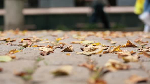 Download Autumn leaves on cobbles. Shooting video below nulled download
