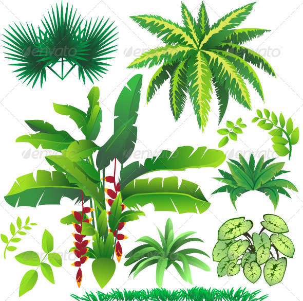 GraphicRiver Tropical Plant Leaves 2785387