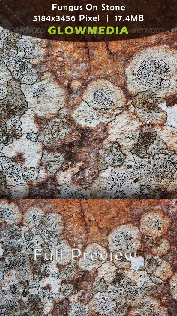 Fungus On Stone - Stone Textures