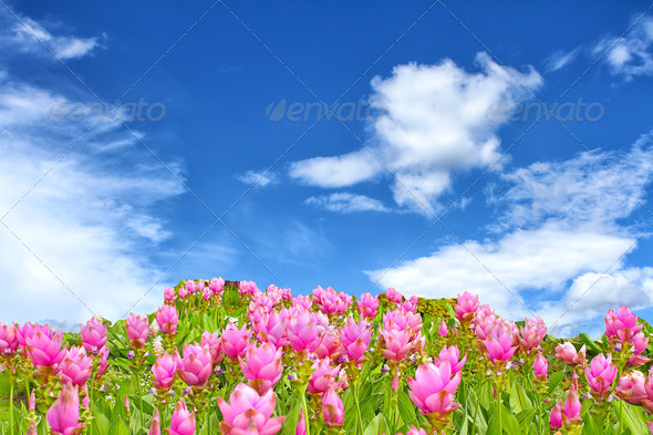 flower over blue sky - Stock Photo - Images
