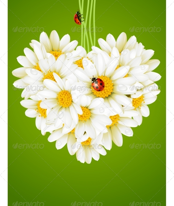 GraphicRiver Floral love card camomile heart 2812411