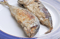 fried mackerel - PhotoDune Item for Sale