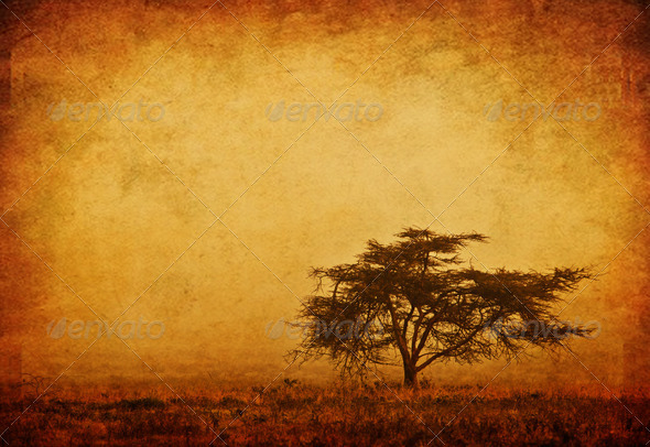 Lonely tree in the mist - Stock Photo - Images