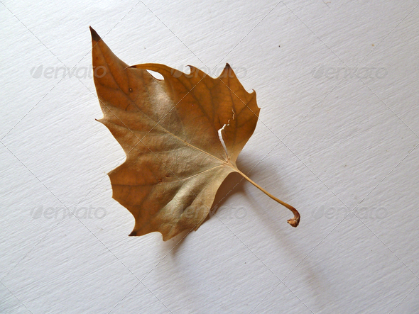 isolated leaf - Stock Photo - Images