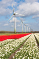 Big Dutch colorful tulip fields with wind turbines - PhotoDune Item for Sale