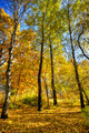 Vivid autumn grove. - PhotoDune Item for Sale
