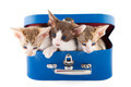 little cats in basket - PhotoDune Item for Sale