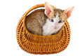 little cat in basket - PhotoDune Item for Sale