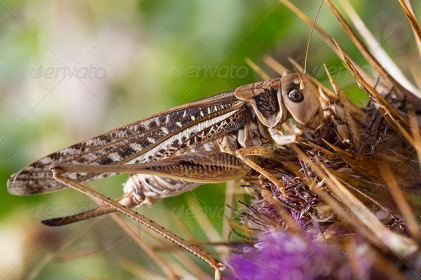 Grasshopper sitting on a flower - Stock Photo - Images
