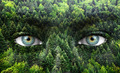 Green forest and human eyes - Save nature concept - PhotoDune Item for Sale