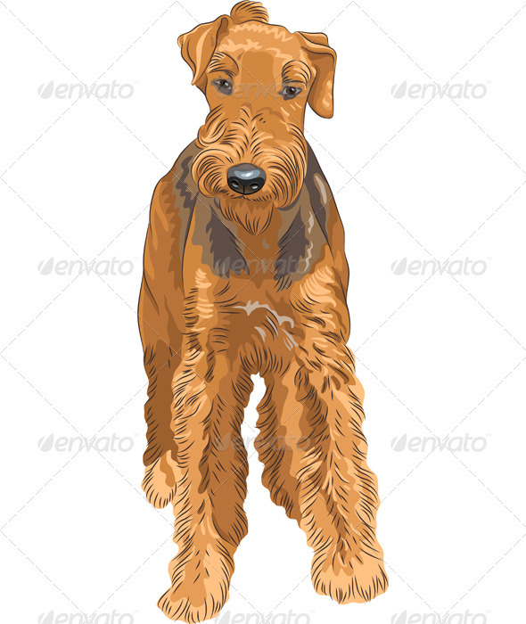 Vector Sketch Dog Airedale Terrier Breed  - Animals Characters