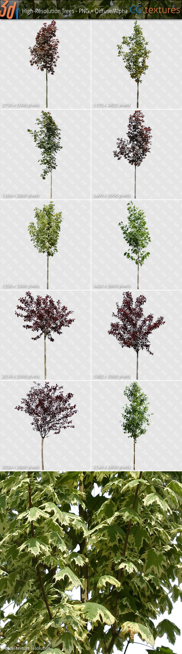 Trees Textures Hi-Res Collection 01 - 3DOcean Item for Sale