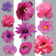 Pink Flowers - GraphicRiver Item for Sale