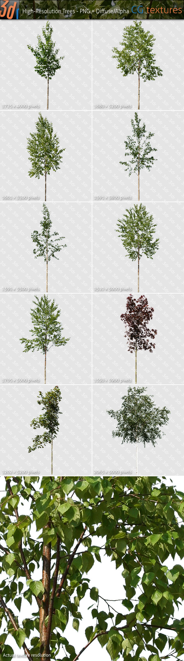 Trees Textures Hi-Res Collection 02 - 3DOcean Item for Sale