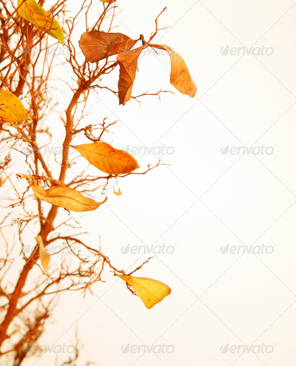 Autumnal tree branch - Stock Photo - Images