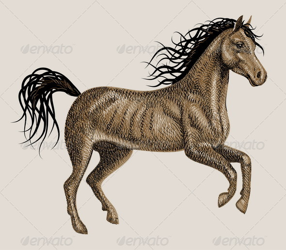 Horse drawing vector - Animals Characters