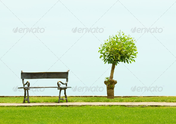 Tree and a vacant bench - Stock Photo - Images