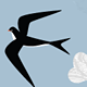 Swallows; Birds flying south for Winter - GraphicRiver Item for Sale