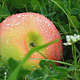 Apple On Grass  - VideoHive Item for Sale