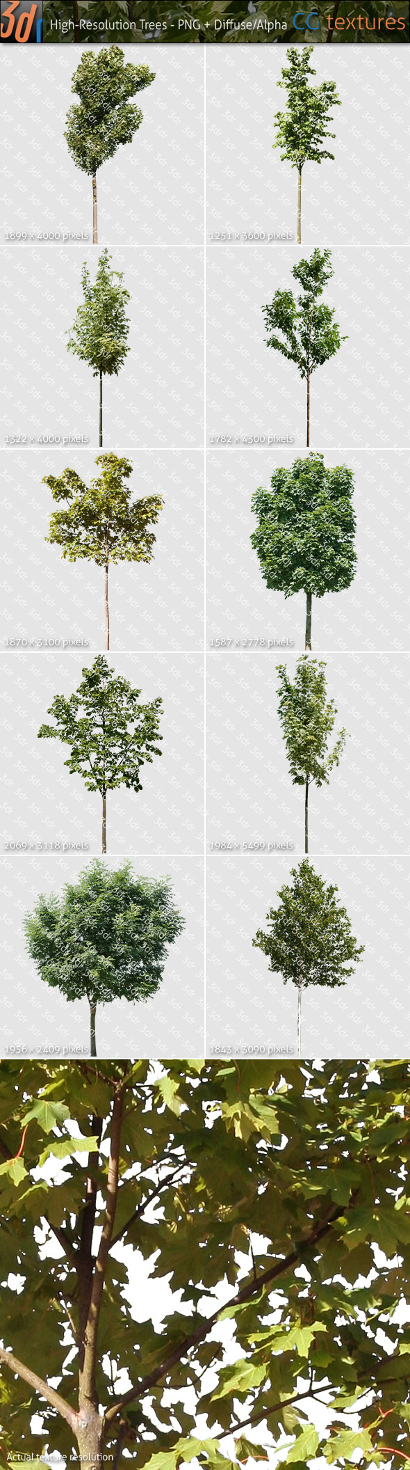 Trees Textures Hi-Res Collection 03 - 3DOcean Item for Sale