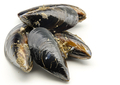 Mussels in the shell - PhotoDune Item for Sale