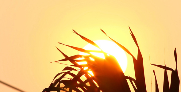 Sunrise And Palm Leaves II