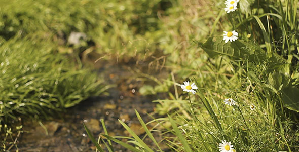 Daisy Flowers And Water Stream Bokeh