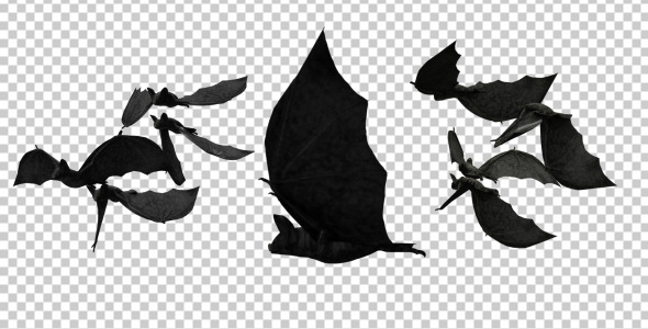 Creepy Bats Transitions By Volkankutlubay Videohive