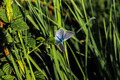 blue butterfly - PhotoDune Item for Sale