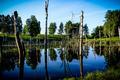 pond - PhotoDune Item for Sale